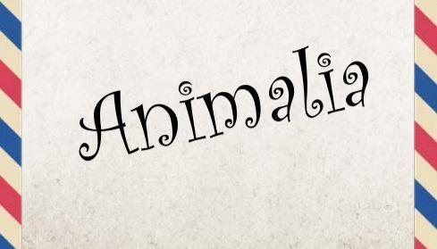 Animalia: Małgorzata Kalicińska napisała książkę o zwierzętach