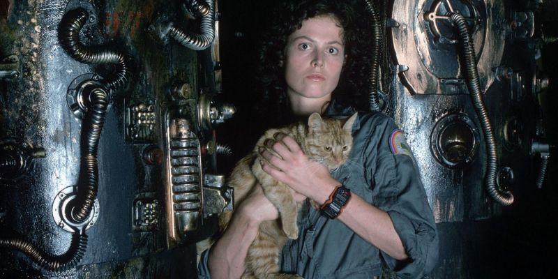 Alien - koty pomagają Obcym w zabijaniu? Brzmi absurdalnie, ale spójrzcie na tę scenę