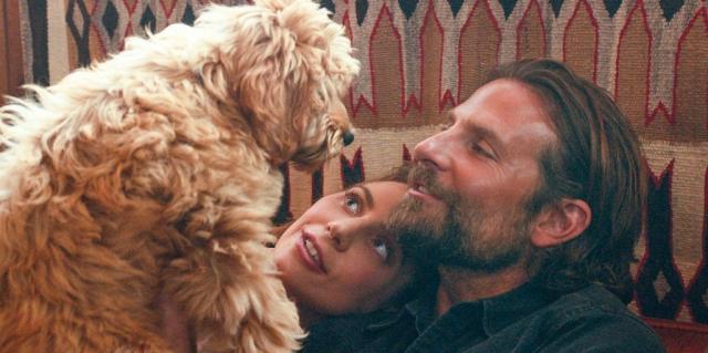 Nie Oscar, a Oscat. Bradley Cooper ze statuetką od PETA