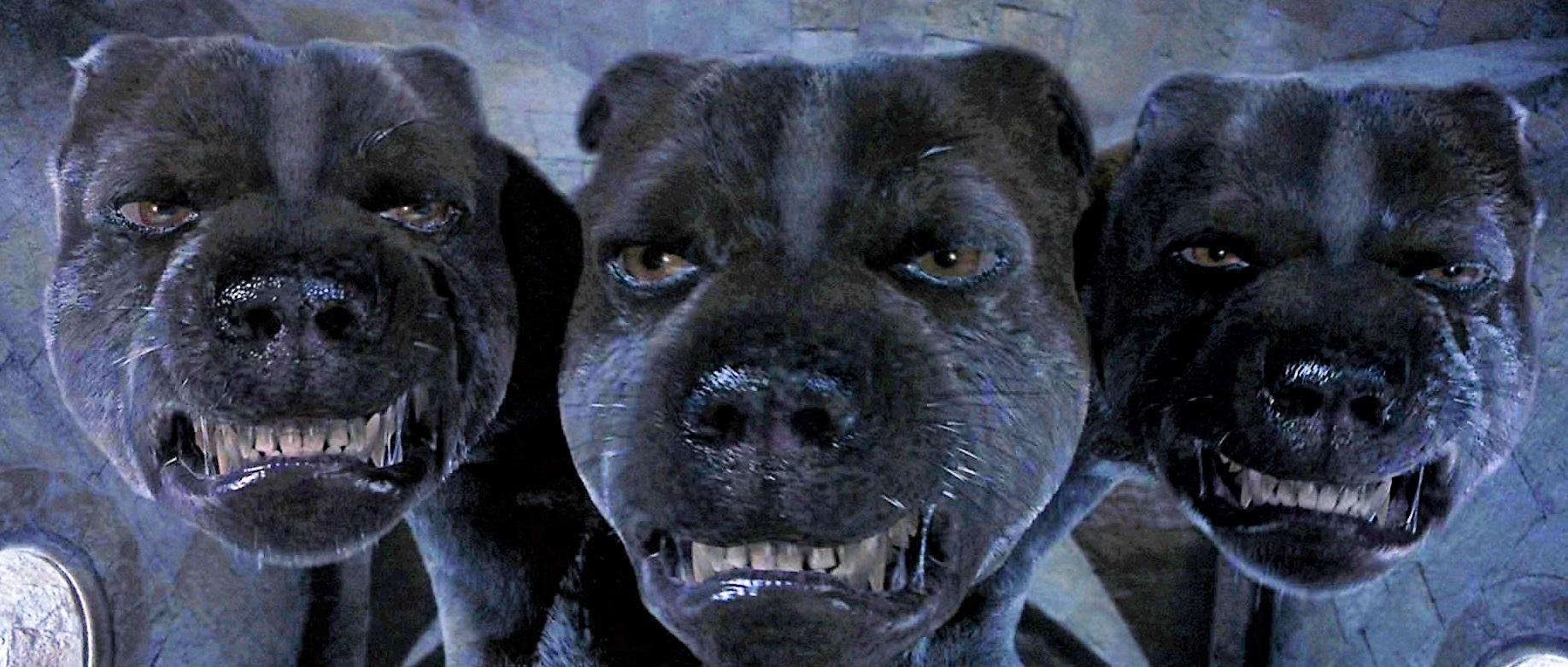 Puszek - Trójgłowy pies